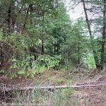 Four major pitfalls to look out for when buying vacant land for a cottage
