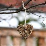 Homemade birdseed feeders - A zero-waste valentine's treat.